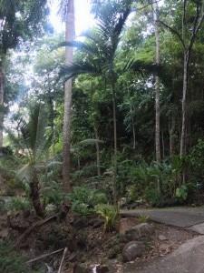 Vilová čtvrť v pralese (pořád to je město)