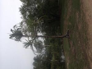 Prales v Cairns
